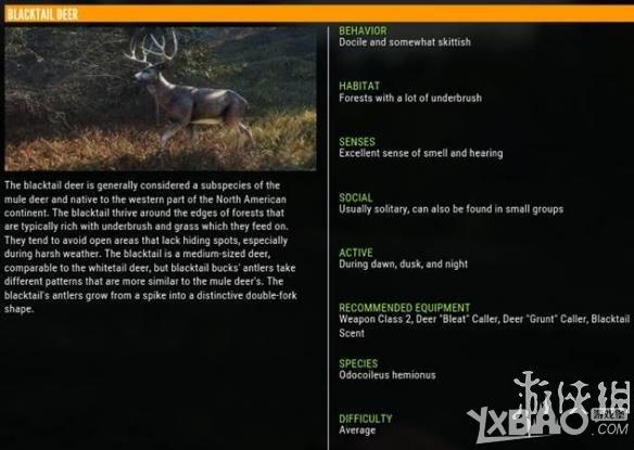 猎人野性的呼唤黑尾鹿怎么样 猎人野性的呼唤黑尾鹿属性一览