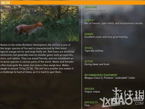 猎人野性的呼唤红狐狸有什么特性 猎人野性的呼唤红狐狸特性介绍