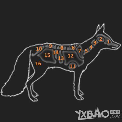 猎人野性的呼唤红狐狸的弱点是什么 猎人野性的呼唤红狐狸弱点一览