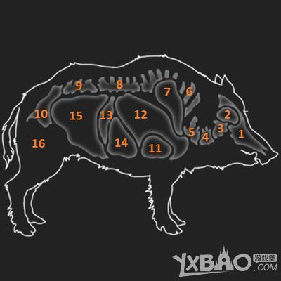 猎人野性的呼唤野猪的弱点是什么 猎人野性的呼唤野猪弱点一览