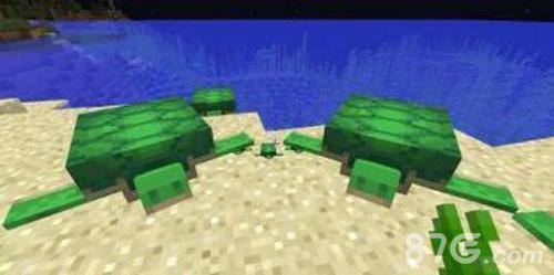 我的世界海龟能驯服吗 海龟有什么用